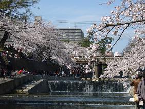 夙川公園2.JPG