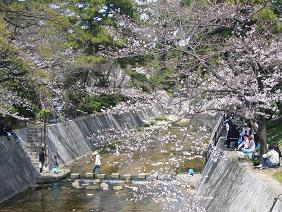 夙川公園5.JPG