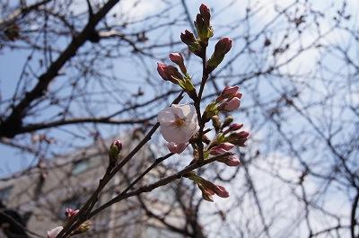 春の花たち1