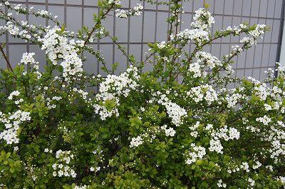 春の花たち2