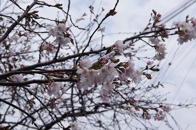 春の花たち4