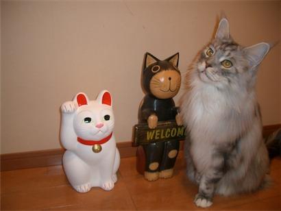 招福猫さんと5