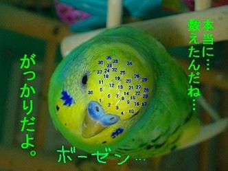 鳥業界用語? 5