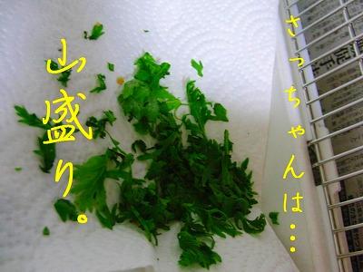 春菊スメルのインコはお好きですか?3