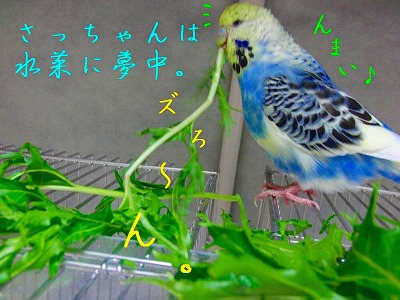 『鳥祭』にちなんで、埼玉ネタをもうひとつ…3