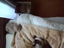 の猫CA3F0554我が家