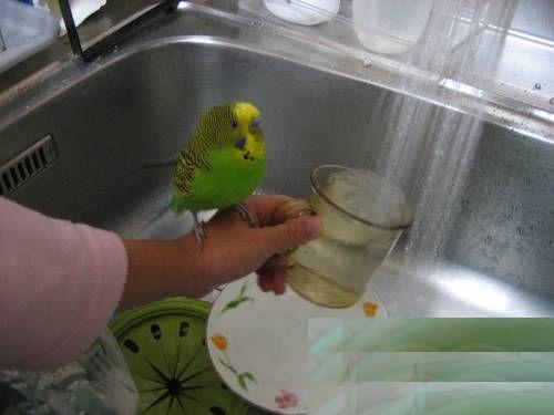 ちーすけ水浴び③