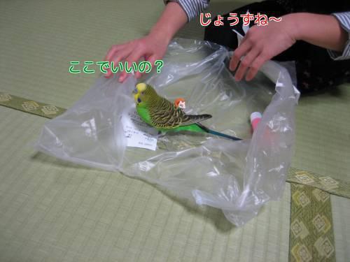 ビニール遊び②