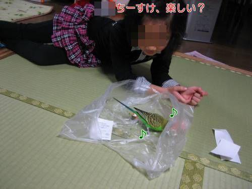 ビニール遊び⑤