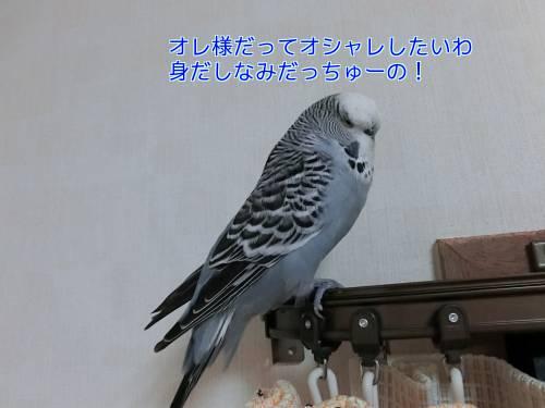 はなの羽④