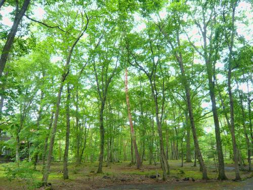 軽井沢の緑