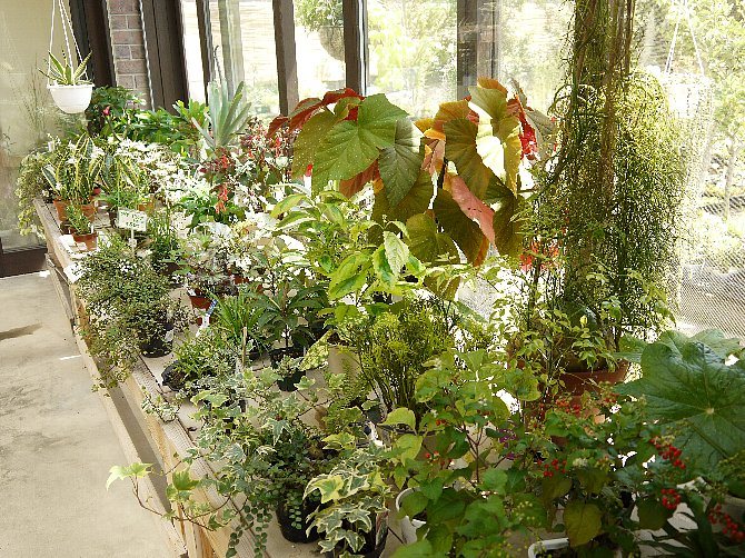 植物いっぱい