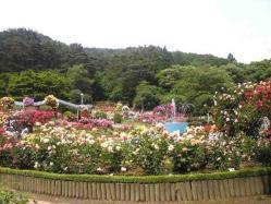 花巻バラ園