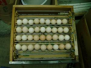 220922孵卵機へ
