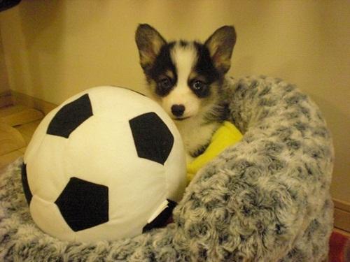 ニコルサッカー