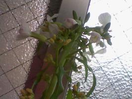 HNI_0095_20120305104245.jpg