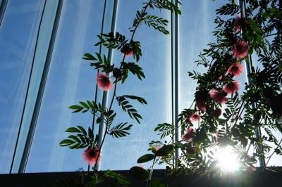 温室越し植物と光