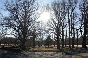 冬木立御苑