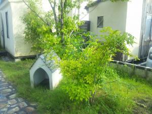 DSC_0099_convert_20110903224219.jpg