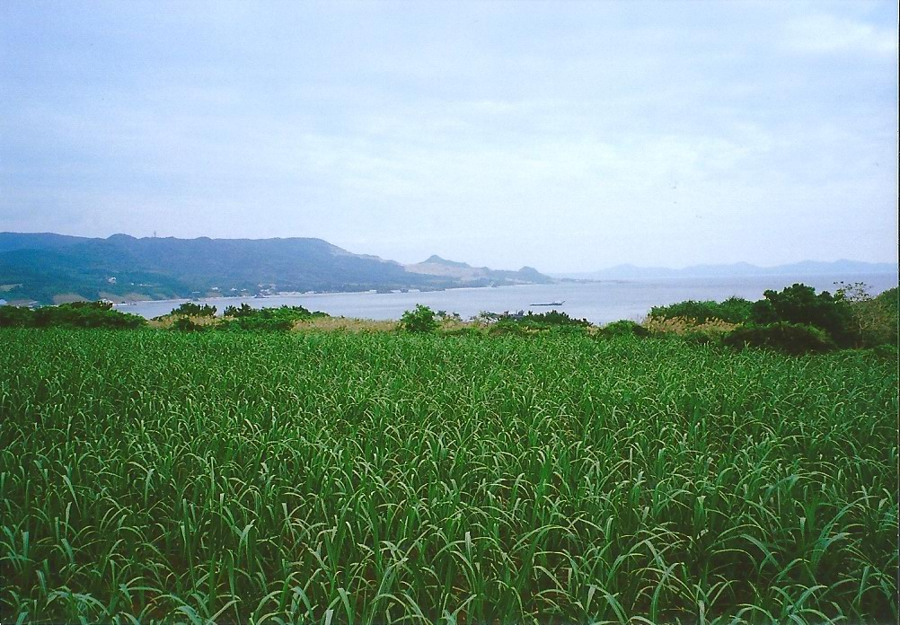 沖縄 (19)
