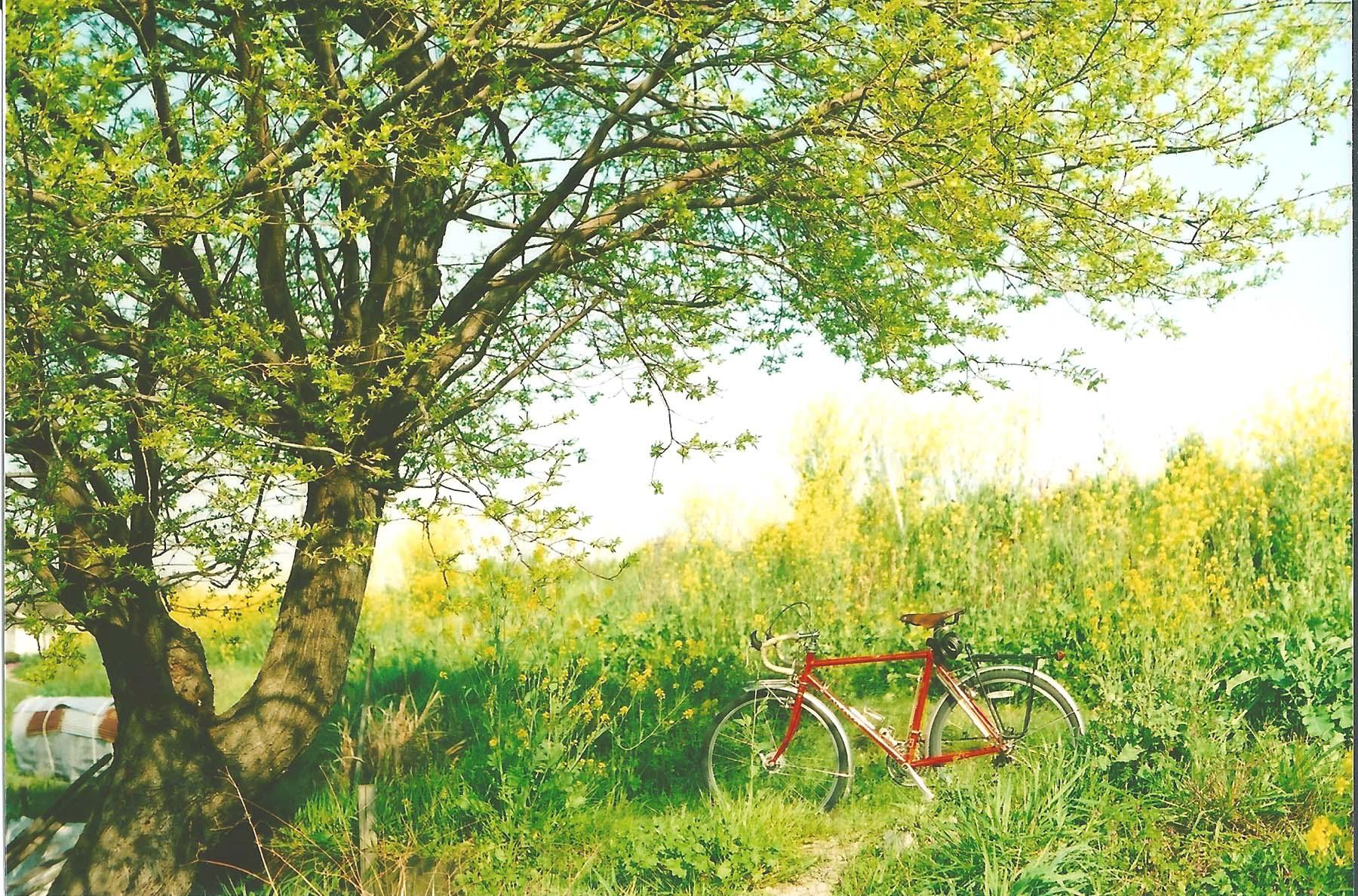 春と自転車
