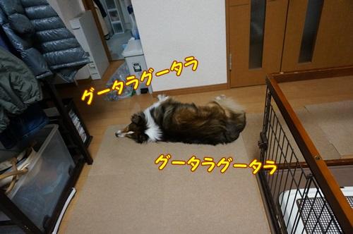 1-DSC01398.jpg
