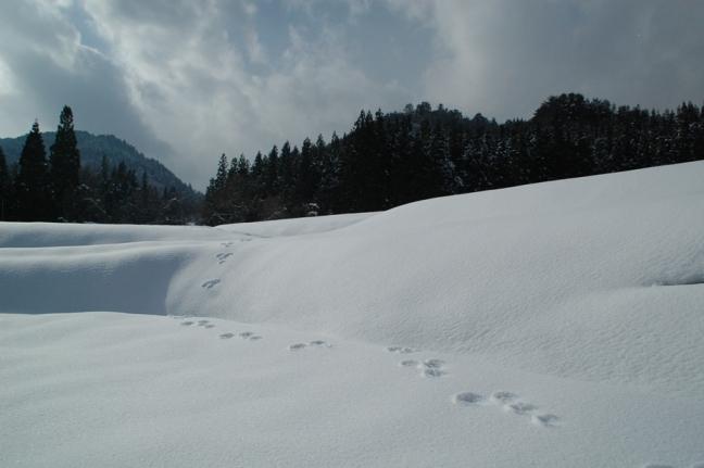 2014-01-12 (3)