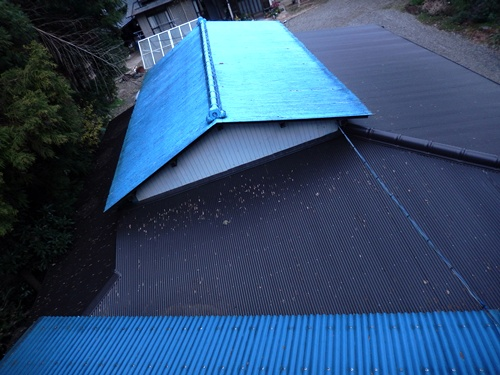 2013.12.14 屋根の清掃(渋柿もぎ) 002