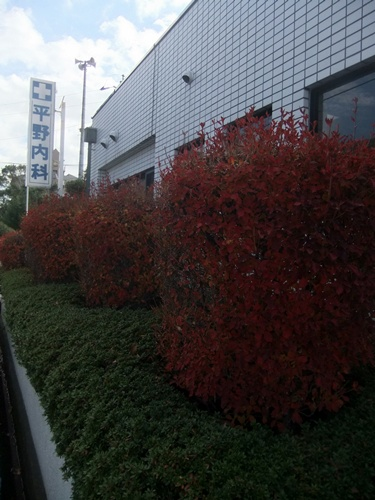 2013.12.11 平野内科(父の掛かり付け医) 004 (2)
