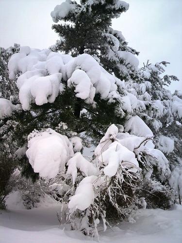 大雪851