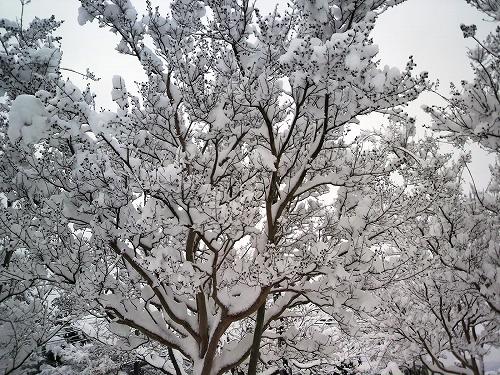 大雪853