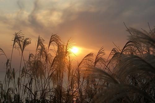 尾花と夕日0635