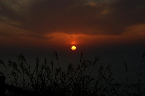 尾花と夕日669