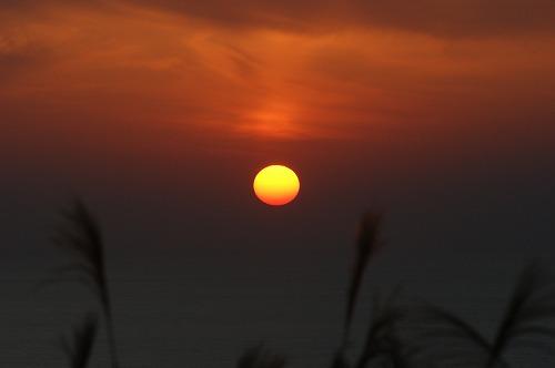 尾花と夕日670