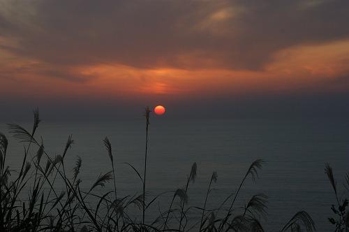 尾花と夕日675