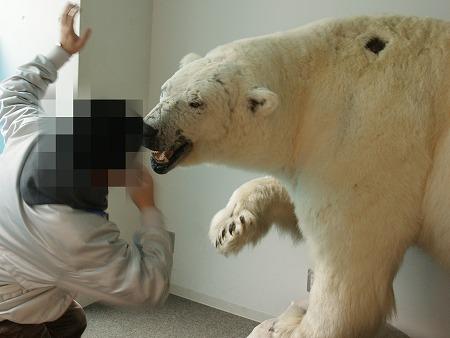 白熊990