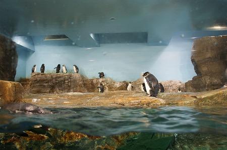 ペンギン994