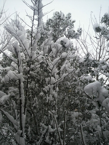 雪景色2810