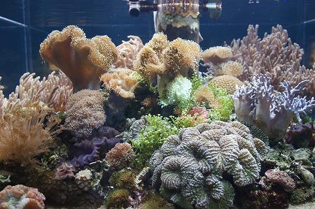 珊瑚0923