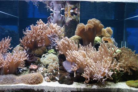 珊瑚0924