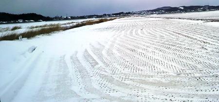 雪の田んぼ02947