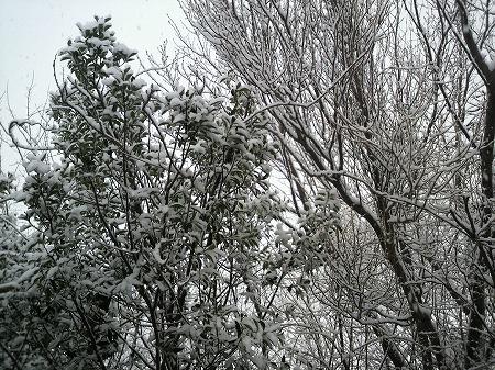 雪3020