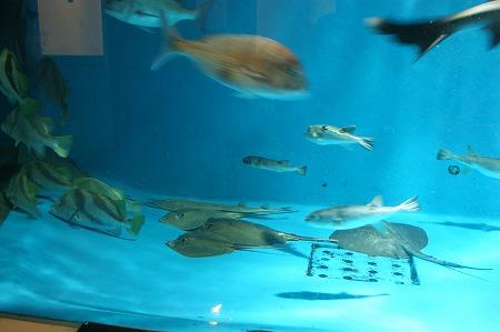 加茂水族館1558