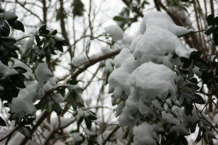 新雪02568