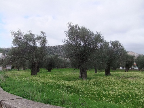 ナクソス_ハルキの畑