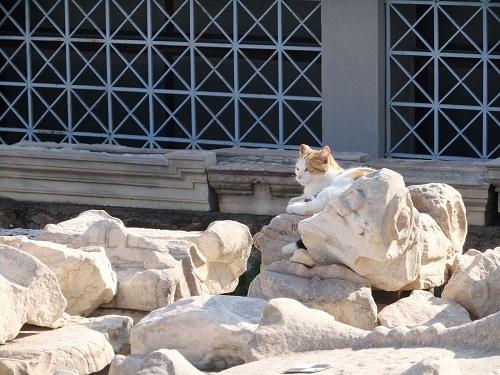 アクロポロスの猫