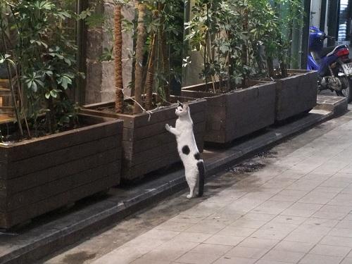 パパンドレウをのぞく猫さん