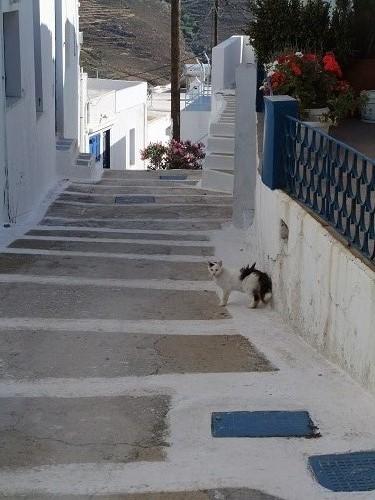 セリフォス_ホラの猫さん (3)