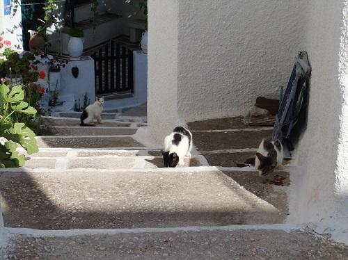 セリフォス_ホラの猫さん (1)