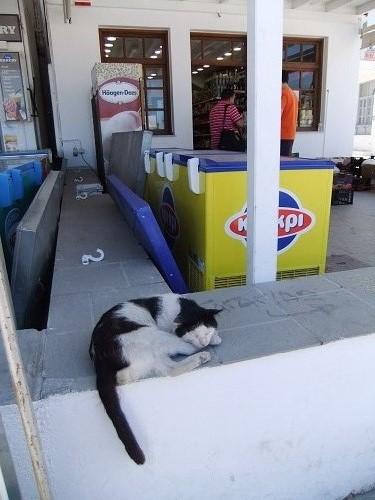 セリフォス_リヴァディの猫さん (1)